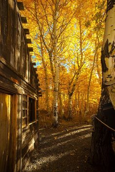 """I took this """"Boat House Among The Autumn Leaves""""picture while on a fishing/photography trip to Silver Lake in the Sierra Nevada Mountains of California. The beauty of that area during the Autumn is breathtaking."""