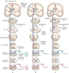 Neurotracts