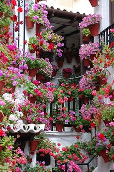 Courtyard garden in Cordoba, Spain. In early May, people proudly decorate their patios with flowers to compete for the city's 'most beautiful courtyard' contest. Jardin Decor, Cordoba Spain, Pot Jardin, Italian Garden, Deco Floral, Window Boxes, Dream Garden, Garden Inspiration, Beautiful Gardens