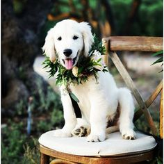 """Greenery looks good on anything and every body! Isn't he the cutest #happilyeverafter #wedding #weddings #weddingday #weddingplanner #weddingplanning #eloped #events #engaged #elopement #engagement #eventstyling #eventplanner #eventsbyshay #eventstylist #greenery #dog #dogs #ringbearer #ceremony #weddingcoordinator #weddingceremony #flowers #florals #floralarrangement #floraldesign #cute"" by @events.by.shay. #이벤트 #show #parties #entertainment #catering #travelling #traveler #tourism…"
