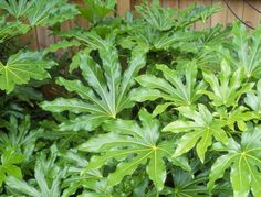 10 tropical plants you can grow in the UK is part of Tropical garden Edging - It's possible to get a tropical style garden without having to swathe your plants in bubble wrap every winter! These are the top tropical plants for a colder climate Tropical Landscaping, Plants, Tropical Garden Design, Tropical Garden Plants, Garden Plants Uk, Patio Plants, Tropical Plants Uk, Tropical Patio, Small Tropical Gardens