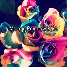 Bucket list: make a rainbow rose!