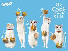 旅行日本各地的代言貓 – にゃらん Nyalan Petmory Vogue
