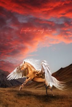 by devils-horizon on DeviantArt Mythological Creatures, Fantasy Creatures, Mythical Creatures, Pegasus, Fantasy World, Fantasy Art, Horse Wallpaper, Winged Horse, Unicorn Pictures