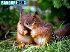 Squirrel love nuts so much. In case you live close to a nut tree, there is a chance that you can spot a squirrel running around carrying a nut. Animals And Pets, Baby Animals, Funny Animals, Cute Animals, Nature Animals, Wild Animals, Cute Squirrel, Baby Squirrel, Squirrels