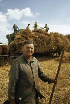 A wheat farmer stands near a heavily laden cart