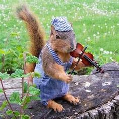 A Mount For Every Taste: The Extremes of Squirrel Taxidermy Funny Squirrel Pictures, Animal Pictures, Cute Pictures, Animal Magic, Funny Love, Cute Funny Animals, Chipmunks, Taxidermy, Animal Kingdom