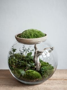 Make your own terrarium. These are thirty five cute terrariums you can make and use as decor anywhere in your home. Feed your design ideas now. Terrarium Plants, Succulent Terrarium, Succulents Garden, Planting Flowers, Bottle Terrarium, Bottle Garden, Water Garden, Container Plants, Container Gardening
