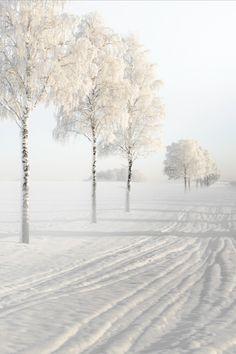 Winter season, love it