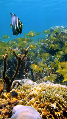 Cozumel's amazing underwater world