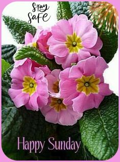 Happy Sunday Quotes, Positive Thoughts, Birthday, Flowers, Night, Birthdays, Royal Icing Flowers, Flower, Dirt Bike Birthday