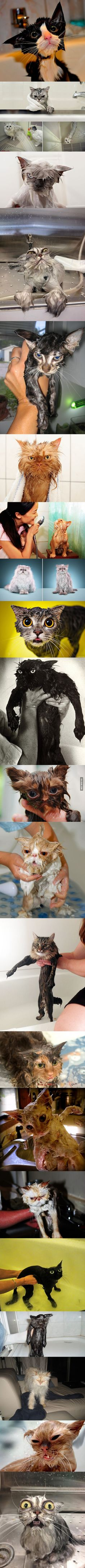 My cat is 21yrs old & can't clean herself like before, (I have to bathe her) - these pics are So Funny