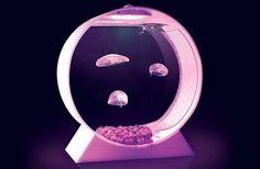 Acquari tropicali per meduse. Da ora in vendita online.