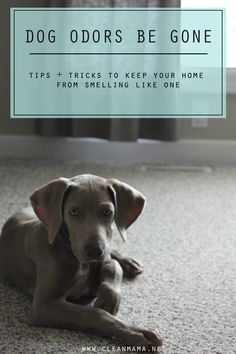 Love dogs but not the smell so much? Check out these tips to keep your home smelling fresh.