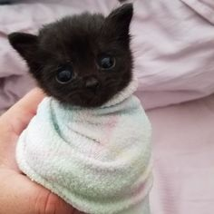 On September 30th, an abandoned kitten was found in a trailer park after a person heard her distressing cries. The Good Samaritan took her home but the tiny feline refused food and wouldn't stop crying.They reached out to a woman, who had raised orphaned kittens, hoping she could help. reddi...
