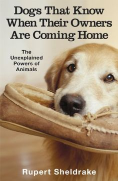 Dogs That Know When Their Owners Are Coming Home: And Other Unexplained Powers of Animals by [Sheldrake, Rupert]