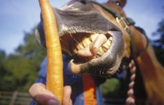 How Your Horse's Senses Affect His Eating Habits