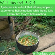 WTF Facts - Page 18 of 1047 - Funny, interesting, and weird facts The More You Know, Good To Know, Did You Know, True Facts, Funny Facts, Random Facts, Wierd Facts, Cool Facts, Random Trivia