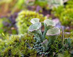 Dark Roasted Blend: Fungus, Lichen, & Moss Sergei Kuznetzov)