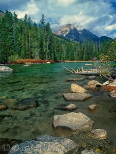 Leigh Lake, Grand Tetons National Park, Wyoming by Dave Welling. Best for camping in July Wyoming, Oh The Places You'll Go, Places To Travel, Places To Visit, Grand Teton National Park, Yellowstone National Park, Belleza Natural, Destinations, The Great Outdoors