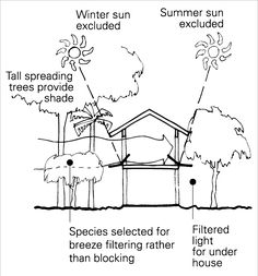 A diagram shows a house on stilts, with an enclosed sub-floor area. Adjacent tall spreading trees provide shade and exclude both the winter and summer sun. Smaller trees and shrubs adjoining the house are selected for breeze filtering rather than blocking. Light for under the house is filtered.