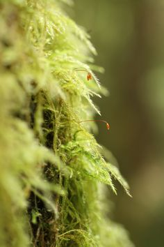 Moss at Cliff Gilker Park, Sunshine Coast, BC, Canada. Robyn Hanson photo.
