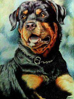 Rottweiler by MicrocampABC on DeviantArt