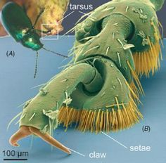 insect feet - Google Search