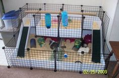 Our new cage is basically 2 in one. Each cage is a mirror image of the other and attached in the middle. Fuzzball and Angel are on the left (the girls side) and Rosco and Despero are on the right (the boys side). Guinea Pig Breeding, Pet Guinea Pigs, Guinea Pig Care, Diy Guinea Pig Cage, Guinea Pig House, Diy Bunny Toys, C&c Cage, Bunny Room, Guniea Pig