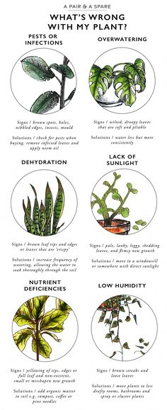 Keep Your Indoor Plants Alive With This Valuable Information! - The Cottage Market Keep Your Indoor Plants Alive With This Valuable Information! - The Cottage Market Container Gardening, Gardening Tips, Organic Gardening, Indoor Gardening, Gardening Services, Gardening Books, Outdoor Gardens, Vintage Gardening, Kitchen Gardening