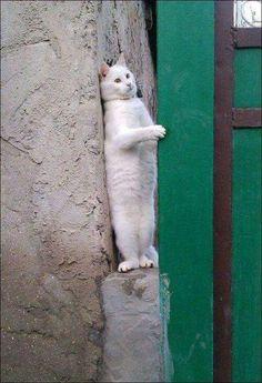 Je suis suivi... Vite statue de camouflage..... #whitecat