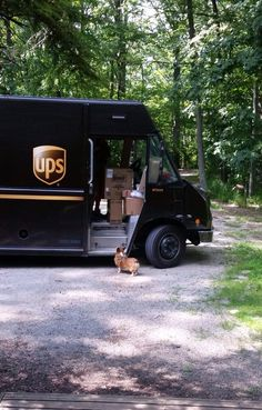 If the Corgi was a black & white Cardigan, I'd say this is one of mine telling off the UPS driver.  My dogs hate the UPS truck above all others for some reason!