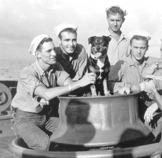 Sinbad was a beloved mascot and formal member of the crew of the US Coast Guard… Coast Guard Cutter, Us Coast Guard, Game Mode, Army Dogs, Military Working Dogs, Military Guys, Famous Dogs, Famous People, Vintage Sailor