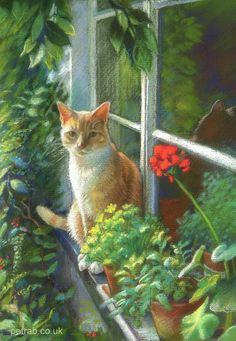 Eye Spy Cat and Geranium, soft pastel pencil painting by Petra Brown
