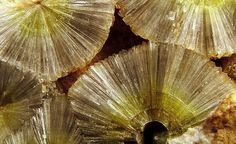 wavellite (hydrous alumnium phosphate) ✏✏✏✏✏✏✏✏✏✏✏✏✏✏✏✏ IDEE CADEAU / CUTE GIFT IDEA  ☞ http://gabyfeeriefr.tumblr.com/archive ✏✏✏✏✏✏✏✏✏✏✏✏✏✏✏✏