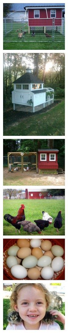How to make your own chicken coops thousands of free chicken coop designs with step by step DIY tutorial instructions How to make your own c...