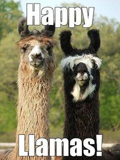 Look! It's the Lammas Llamas! Okay, so it has nothing to do with Lammas but it made me LOL! :P