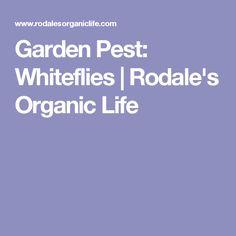 Garden Pest: Whiteflies | Rodale's Organic Life