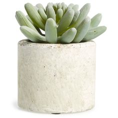 Allstate Mini Artificial Succulent (335 UAH) ❤ liked on Polyvore featuring home, home decor, floral decor, plants, fillers, green, plant fillers, pine green, green home decor and modern home accessories