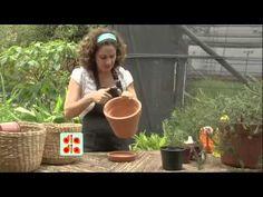 Aprenda a cultivar alecrim dentro de casa - YouTube