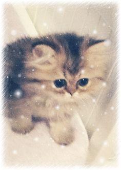 My cat❤️i love it❤️it is so beuteful name : elli it's a a very very good name❤️i love my cat