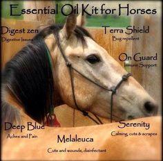 Natural treatments for your horse using essential oils! www.mydoterra.com/reginareed