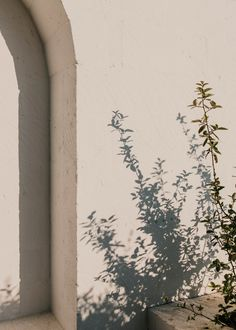 Masseria Moroseta is a white stone farmhouse built on a organic olive grove near Ostuni designed by Andrew Trotter. Light And Shadow, How To Dry Basil, Aesthetic Wallpapers, Surfing, Landscape, Photography, Pictures, Outdoor, Image