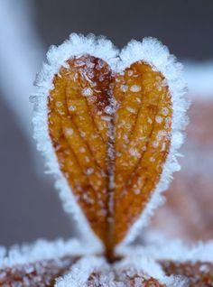 Heart shaped frosty leaf