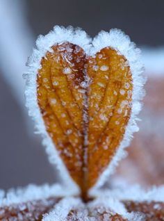 heart shaped frosty leaf