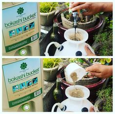 Bokashi tea--the liquid that you drain out of your Bokashi Bucket--can be an active addition to your garden/plant management. It's powerful--a very small dose will go a long way! It's also very acidic, so dilute it AT LEAST 100:1 with water.