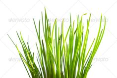 Isolated green grass on white background 2