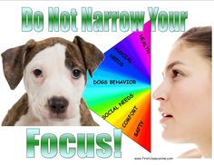 When we narrow our focus and get a behavior no matter the cost, we all loose. Safety, health and emotional well being are as important as the behavior! Behavior Modification, First Class, Dog Behavior, When Us, Dog Training, Safety, Healing, Wellness, Security Guard