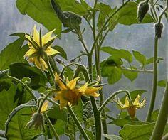 89 Best Lanai Farming The Garden Images Garden 400 x 300