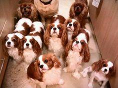 Expectancy of treats :-)